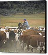 Cattle Round Up Patagonia Canvas Print