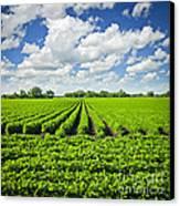 Rows Of Soy Plants In Field Canvas Print by Elena Elisseeva