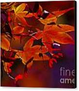Royal Autumn A Canvas Print by Jennifer Apffel