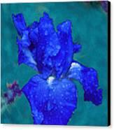 Royal Blue Iris Canvas Print