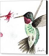 Ruby Throated Hummingbird Canvas Print by Brenda Ruark