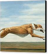 Running Free Canvas Print by James W Johnson