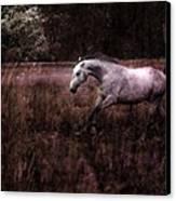 Running Through The Purple World Canvas Print