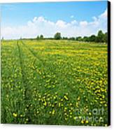 Rural Road Flower Canvas Print by Boon Mee