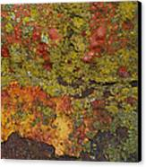 Rusty Canvas Print by Tom Druin