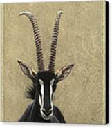 Sable Canvas Print by James W Johnson