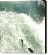 Salmon Run 4 Canvas Print by Mamie Gunning