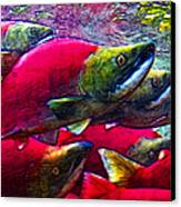 Salmon Run Canvas Print by Wingsdomain Art and Photography