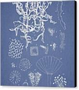 Salwater Algae Canvas Print