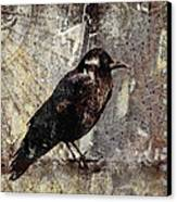 Same Crow Different Day Canvas Print