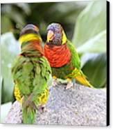 San Diego Zoo - 1212341 Canvas Print