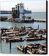 San Francisco Pier 39 Sea Lions 5d26102 Canvas Print