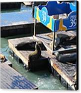 San Francisco Pier 39 Sea Lions 5d26105 Canvas Print by Wingsdomain Art and Photography