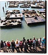 San Francisco Pier 39 Sea Lions 5d26111 Canvas Print by Wingsdomain Art and Photography