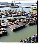 San Francisco Pier 39 Sea Lions 5d26116 Canvas Print by Wingsdomain Art and Photography
