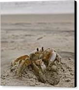 Sand Crab Canvas Print by Nelson Watkins