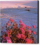 Sand Verbenas At Sunset White Sands National Monument Canvas Print