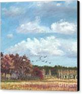 Sandhill Cranes At Crex With Birch  Canvas Print by Jymme Golden