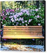 Savannah Bench Canvas Print by Carol Groenen