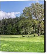 Save My Tree Canvas Print