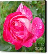 Scented Rose Canvas Print by Ramona Matei