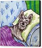 Schnauzer Sleeping Canvas Print by Jay  Schmetz