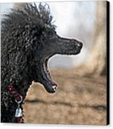 Screaming Canvas Print by Steven  Michael