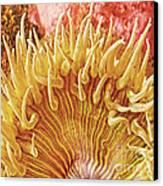 Sea Anenome Stretch Canvas Print
