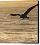 Sea Bird In Flight Canvas Print by Paul Topp