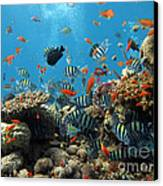 Sea Life Canvas Print by Boon Mee