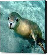 Sea Lion On The Seafloor Canvas Print by Crystal Beckmann