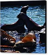 Sea Lions In San Francisco Bay Canvas Print by Aidan Moran