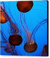 Sea Nettle Jelly Fish 5d25075 Canvas Print by Wingsdomain Art and Photography