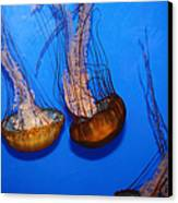 Sea Nettle Jelly Fish 5d25076 Canvas Print