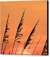 Sea Oat Sunset Canvas Print by JC Findley