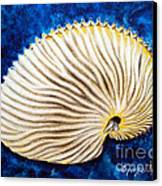 Sea Shell Original Oil On Canvas No.2. Canvas Print by Drinka Mercep
