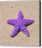 Sea Star - Purple Canvas Print by Al Powell Photography USA
