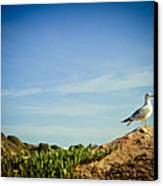 Seagull On The Rock Canvas Print by Raimond Klavins