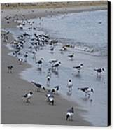 Seagulls On The Delaware Bay Canvas Print by Bill Cannon