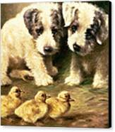 Sealyham Puppies And Ducklings Canvas Print