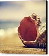 Seashell In The Sand  Canvas Print by Jelena Jovanovic