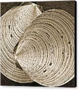 Seashells Spectacular No 11 Canvas Print