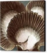 Seashells Spectacular No 22 Canvas Print by Ben and Raisa Gertsberg