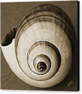 Seashells Spectacular No 25 Canvas Print by Ben and Raisa Gertsberg