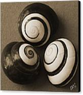 Seashells Spectacular No 28 Canvas Print by Ben and Raisa Gertsberg