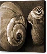 Seashells Spectacular No 6 Canvas Print