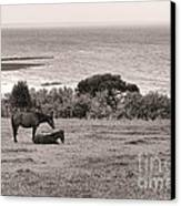 Seaside Horses Canvas Print by Olivier Le Queinec