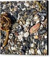Seaweed And Shells Canvas Print