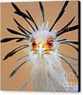 Secretary Bird Portrait Close-up Head Shot Canvas Print by Johan Swanepoel