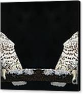 Seeing Double- Snowy Owl At Twilight Canvas Print